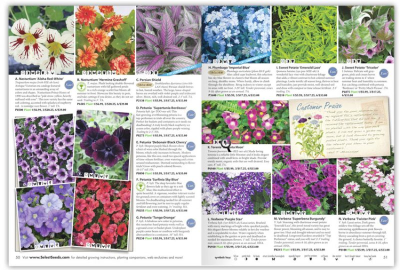 Seed and Flower Catalog Page Design