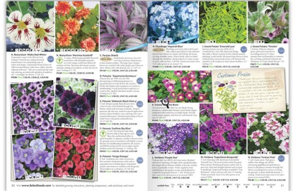 Seed and Flower Catalog Page Des...